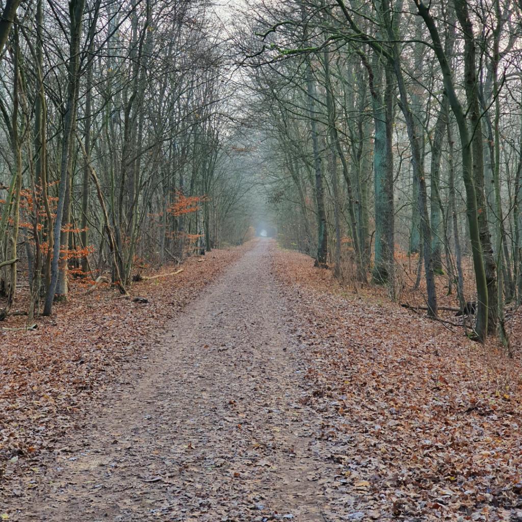Waldspaziergang Brieselang - Dezember 2020 - Waldweg