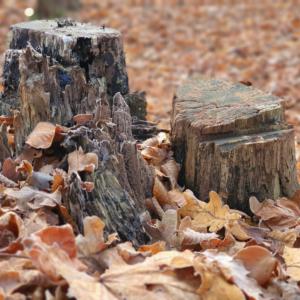 Waldspaziergang Brieselang - Dezember 2020 - Baumstümpfchen
