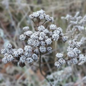Waldspaziergang Brieselang - Dezember 2020 - Pflanze