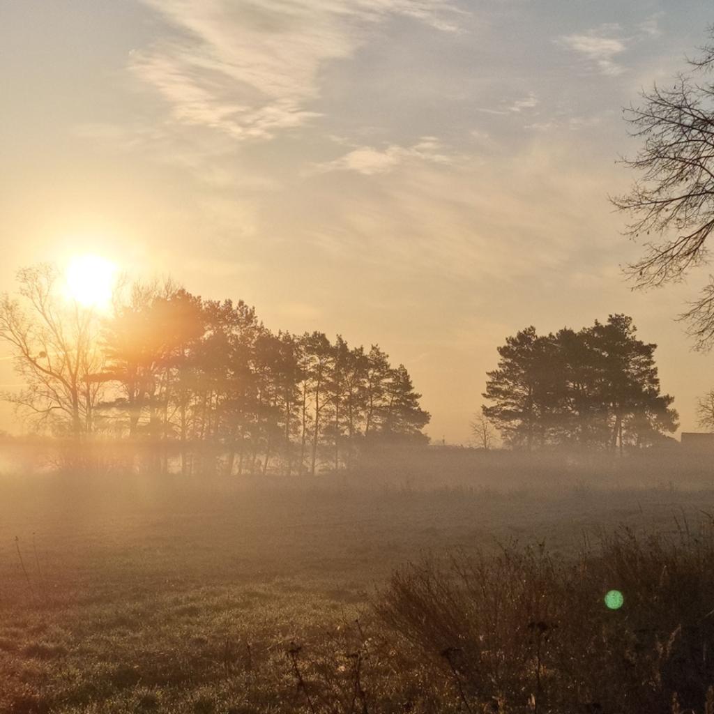 Sonnenaufgang mit Nebelschwaden - Falkensee März 2021