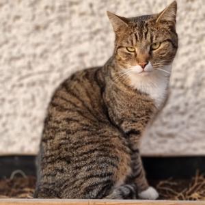 Katze Murkel im Hochbeet