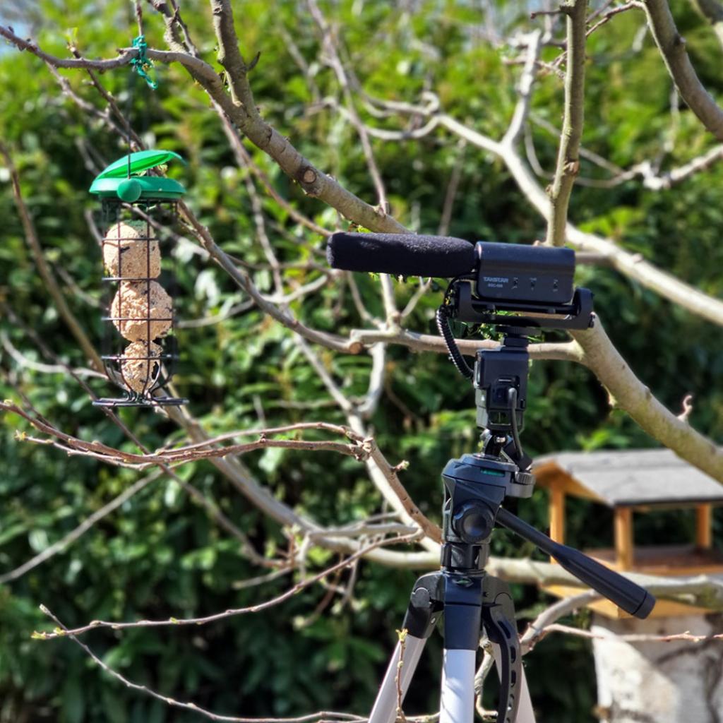 Vogelbeobachtung 2020