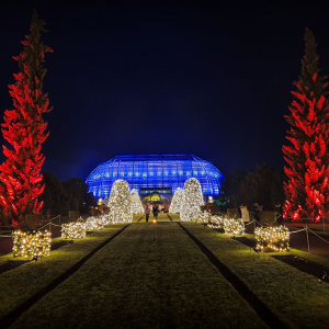 Christmas Garden 2019 – #12