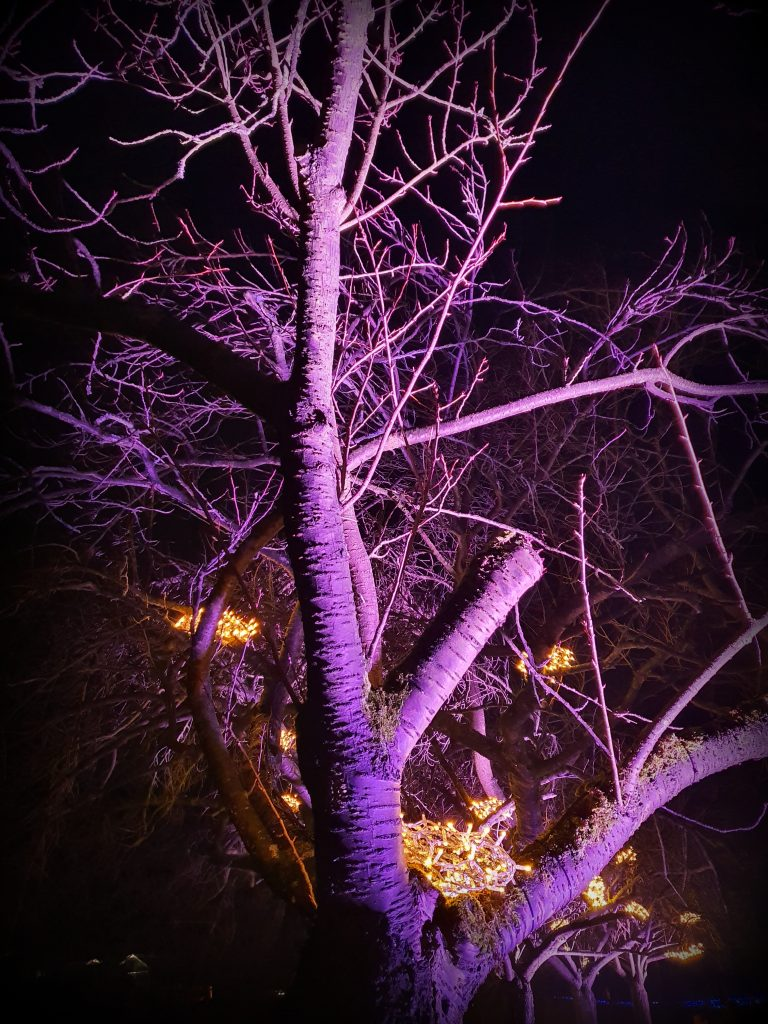Christmas Garden Botanischer Garten Berlin - Dezember 2019
