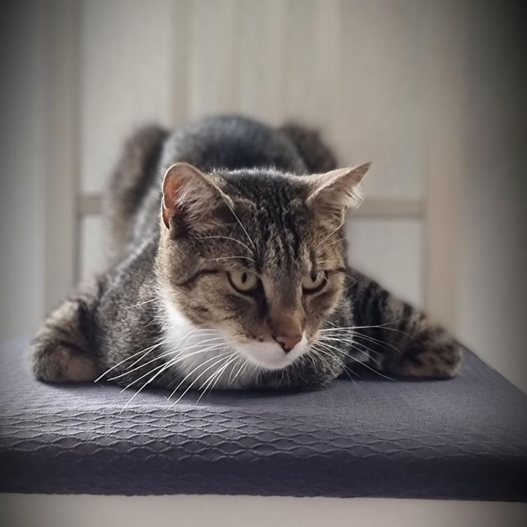 Murkel wartet auf Futter